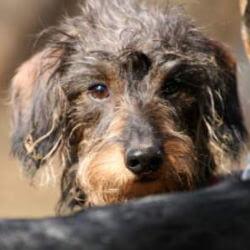 Eddy - Hundetagesstätte Olympiapark
