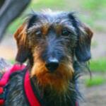 Felix - Hundetagesstätte Olympiapark
