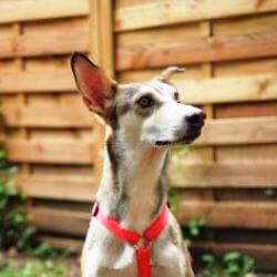 Pino - Hundetagesstätte Olympiapark