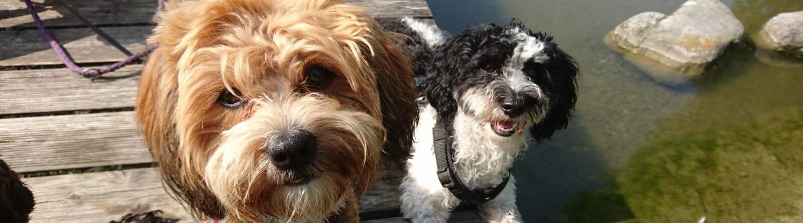 Teddy und Snoopy Huta München